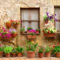 عکس با کیفیت دیوار خانه پر شده از گلدان ها با گل های رنگارنگ و دو پنجره